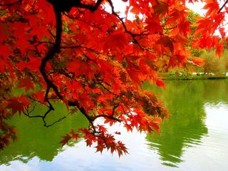 Free-pictures-fall-autumn-colors-leaves-Mexicanwave