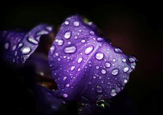 Irisviolet